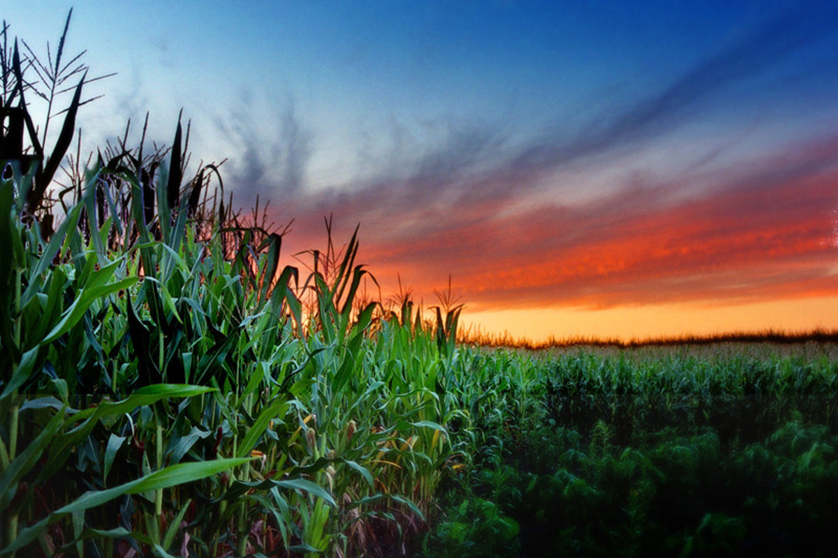 Warming Midwest conditions may result in corn, soybean production moving north